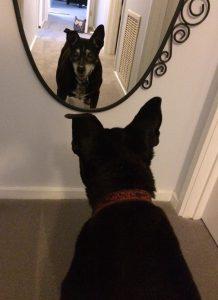 Photo of Tess the dog