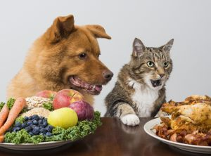 Image of dog and cat with vegetable plate and roast chicken